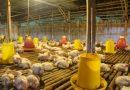 Percayalah! Harga Beras, Sapi dan Ayam di Indonesia Bukan Yang Tertinggi di Dunia!